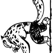 A Tigresa indo lutar