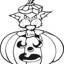 Desenho de um gato brincando com uma abóbora para colorir
