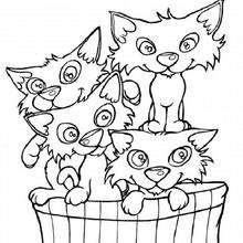 Gatinhos numa cesta