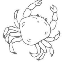 Desenho de um Caranguejo para colorir