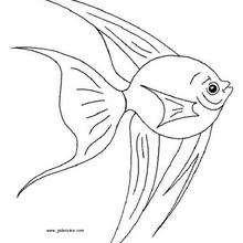 Desenho de um Peixe para colorir