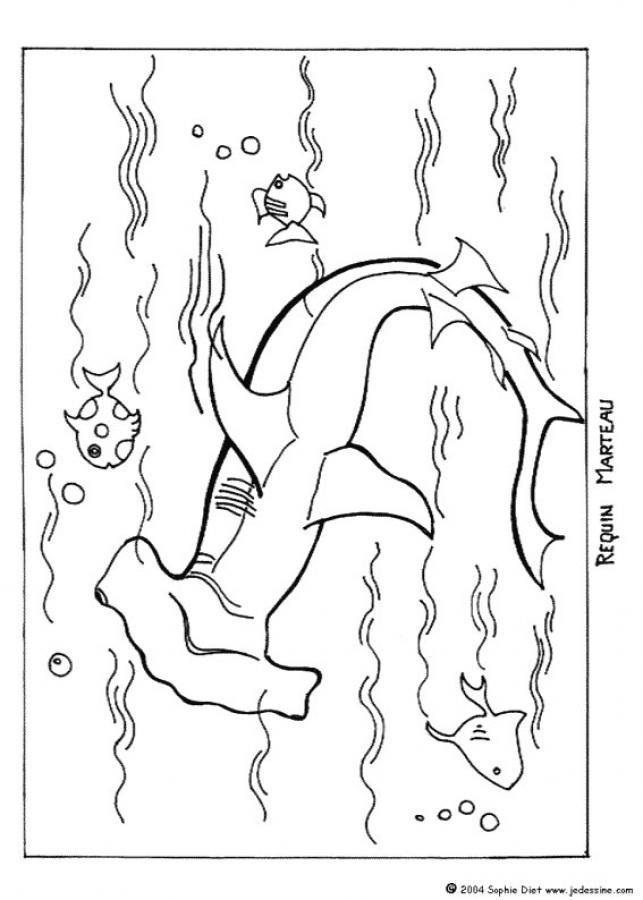 Desenhos para colorir de desenho de um tubarão-martelo ...