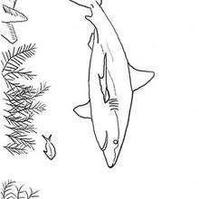 Desenho de um tubarão para colorir