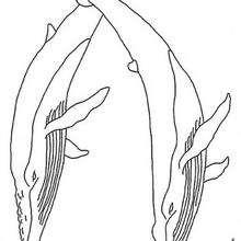 Desenho de uma baleia para colorir