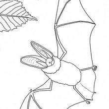 Desenho de um Morcego com uma Borboleta para colorir
