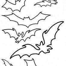 Contornos de Morecego