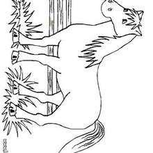 Desenho de um grande cavalo para colorir