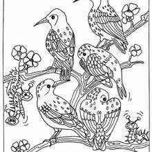 Desenho de um pássaro para colorir