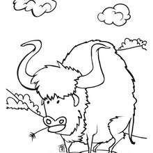 Desenho de um Búfalo para colorir