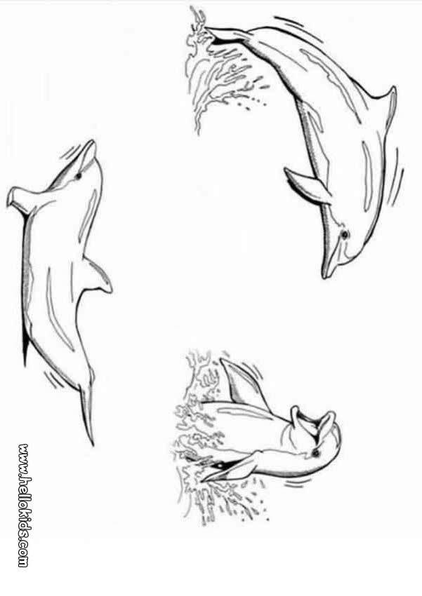Desenhos para colorir de desenho de golfinhos brincando para colorir - Dessin a imprimer de dauphin ...