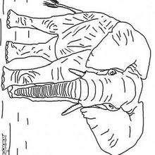 Desenho de um elefante andando para Colorir