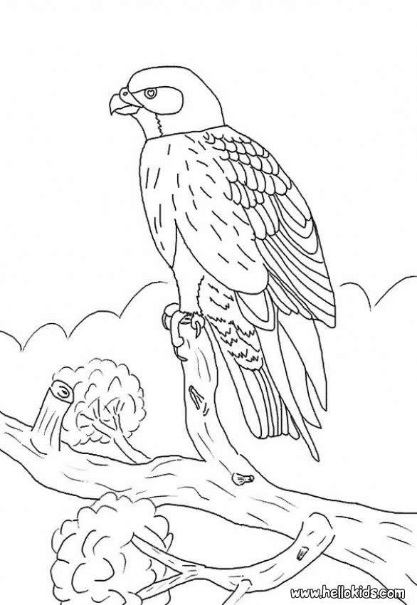 Desenho de um Falcão para colorir