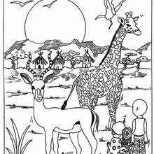 Desenho de uma Girafa com uma antílope para colorir