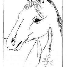 O retrato de um Cavalo para colorir