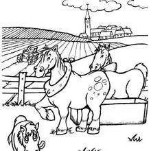Desenho de um Cavalo para colorir