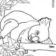 Desenho de um Koala para colorir