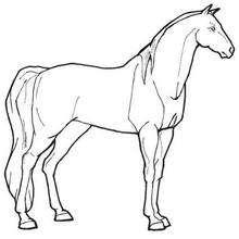 Desenho de uma Égua adorável para colorir