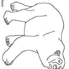 Desenho de um Urso Polar para colorir