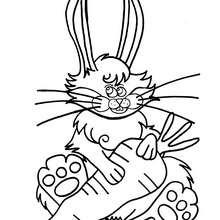 Desenho de um coelho com sua cenoura para colorir