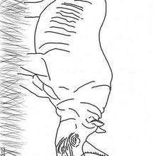 Desenho de um Rinoceronte para colorir