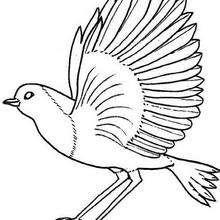 Desenho do Robin para colorir