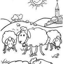 Desenho de uma Ovelha para colorir