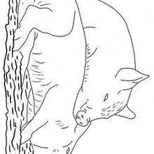 Desenho de dois porquinhos para colorir