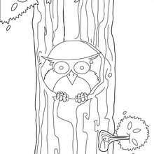 Desenho de uma coruja para colorir