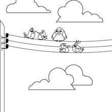 Desenho de Pardais no poste elétrico para colorir