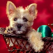 Papél de parede: cachorrinho em uma cesta de natal