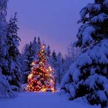 Papél de parede: Árvore de Natal iluminada na Floresta