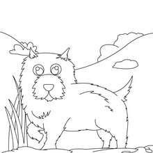 Desenho de um Chow chow  para colorir