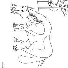 Um lindo Cavalo para colorir online