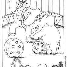 Desenho de Elefantes do circo para colorir