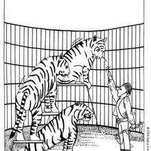 Desenho de Tigres do circo para colorir