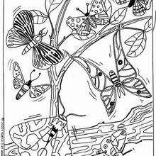 Desenho de lindas Borboletas para colorir