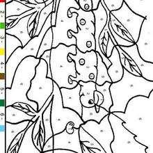 Colorindo pelos números : minhoca