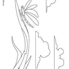 Desenho de uma Libélula para colorir online