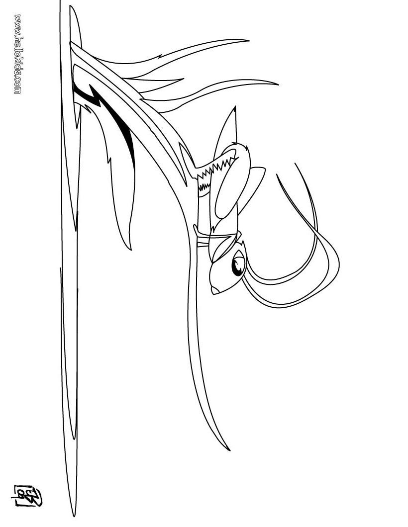 desenhos para colorir de desenho de um gafanhoto para colorir online
