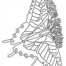 Desenho de uma Borboleta multicolorida para colorir