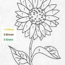 Colorir a linda flor pelos números