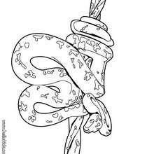 Desenho de uma Jibóia enroscada para colorir