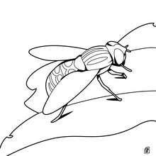 Desenho de uma mosca  para colorir