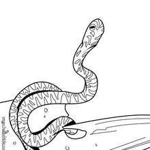 Desenho de uma cobra para colorir