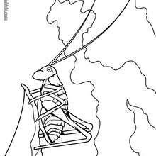 Desenho de um Grilo para colorir online