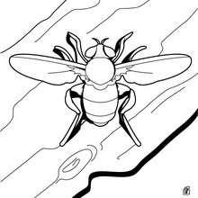 Desenho de uma abelha para colorir online