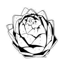 Desenho de uma Alcachofra  para colorir