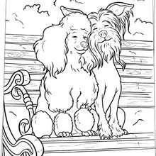 Desenho de cachorros apaixonados para colorir