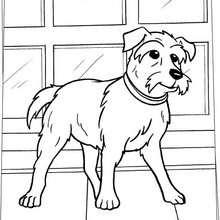 Desenho do cachorro Sexta-feira para colorir