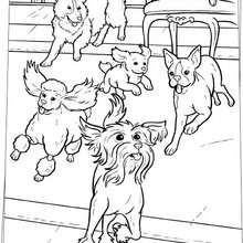Desenho de cachorros correndo para colorir